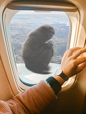 Vermeer Rights Managed Images - Macaque Monkey and Airplane Window Surreal Royalty-Free Image by Barroa Artworks