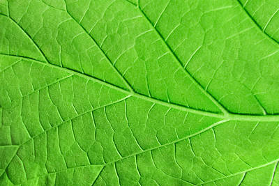 Royalty-Free and Rights-Managed Images - Macro green leaf ecology plant background by Julien