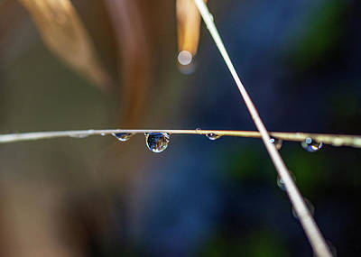 Blue Hues - Macro Photography - Water Drops on Stem by Amelia Pearn