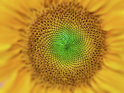 Photograph - Macro Sunflower by Nature Photography
