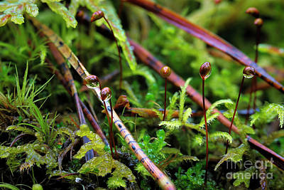 Fantasy Royalty-Free and Rights-Managed Images - Macro world 10 by Veikko Suikkanen