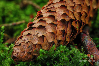 Fantasy Royalty-Free and Rights-Managed Images - Macro world 11 by Veikko Suikkanen