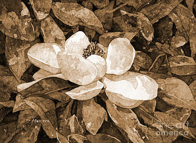 Typographic World - Magnolia Blossom in sepia tone by Hailey E Herrera