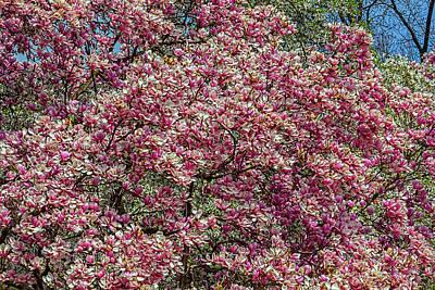 Priska Wettstein Land Shapes Series - Magnolia Blossoms_12 by Robert Ullmann