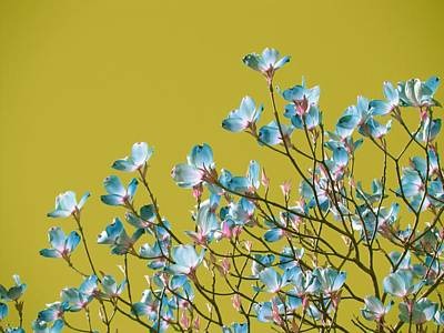 Royalty-Free and Rights-Managed Images - Magnolia tree - surreal sky by Marianna Mills