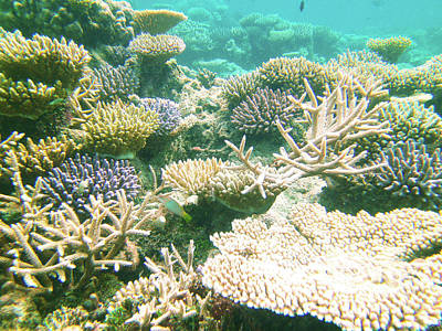 World War 2 Action Photography - Maldives Coral Reef 001 by Sara Ferber