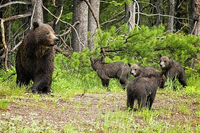 Animal Portraits - Mama Checking Out the Traffic with Cubs Waiting for Her Cue by Belinda Greb