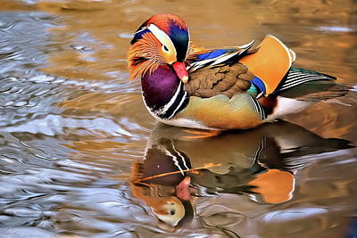 Birds Rights Managed Images - Mandarin duck of Central Park series II Royalty-Free Image by Geraldine Scull