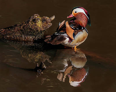 Keith Richards - Mandarin Duck Reflections by Wes and Dotty Weber