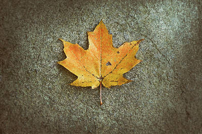 Food And Flowers Still Life Rights Managed Images - Maple Leaf on Stone Royalty-Free Image by Scott Norris