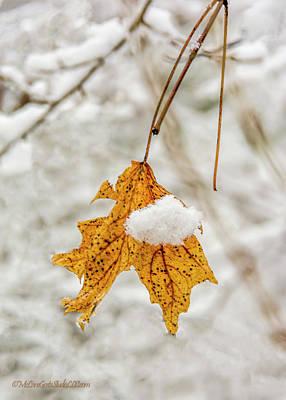 Photograph - Maple Snow Covered Leaf  by LeeAnn McLaneGoetz McLaneGoetzStudioLLCcom