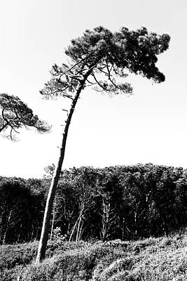 Red Roses - Maritime Pine by Valerio Poccobelli