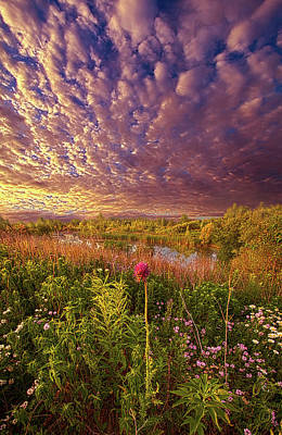 Royalty-Free and Rights-Managed Images - Matters of All Nature by Phil Koch