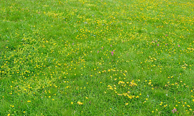 Royalty-Free and Rights-Managed Images - meadow of wild flowers of the Dolomites Alps on summer day by Julien