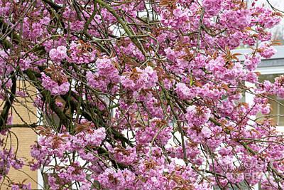 Fruits And Vegetables Still Life - Memories Of Spring Sakura by Marina Usmanskaya