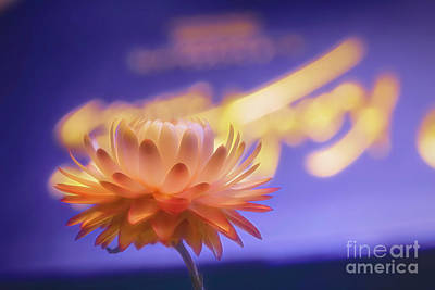 Royalty-Free and Rights-Managed Images - Memories of summer 5 by Veikko Suikkanen