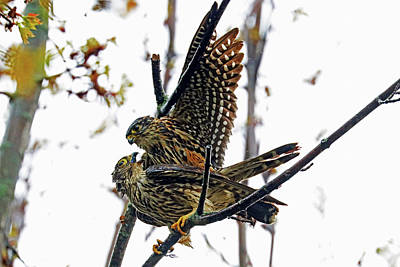 Not Your Everyday Rainbow - Merlins by Debbie Oppermann