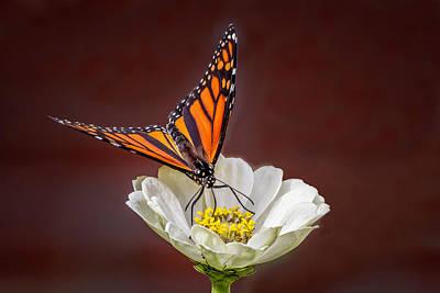Anne Geddes Collection - Meticulous Monarch  6766 by Karen Celella