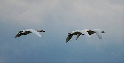Abstract Graphics - Migrating Swans by Roger Look