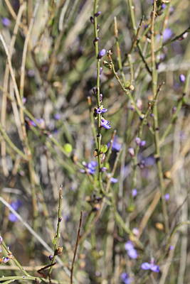 Kitchen Food And Drink Signs - Milkwort by Michaela Perryman