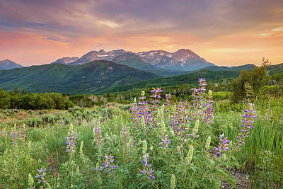 Catch Of The Day - Mill Canyon Lupine by Johnny Adolphson