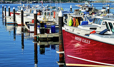 Animal Paintings David Stribbling - Miss Lilly - Provincetown Harbor by Allen Beatty