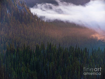 Little Mosters - Mist in the Valley MRNP by Mike Reid