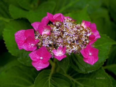 On Trend At The Pool - Misty Hydrangea by Richard Thomas
