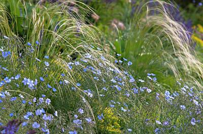 Aloha For Days - Mix Border With Blue Flax And Stipa Pennata 1 by Jenny Rainbow