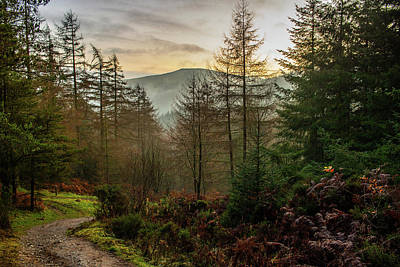 Photograph - Moel Famau Forest Path by Paul Madden