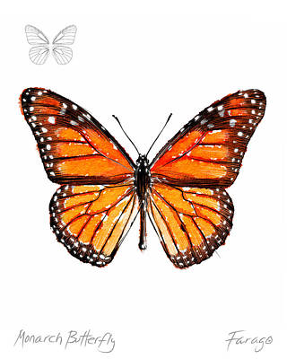 Drawing - Monarch butterfly by Peter Farago
