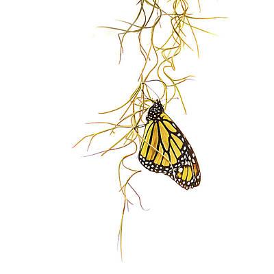 Keith Richards - Monarch Wings Folded by Debra Martz