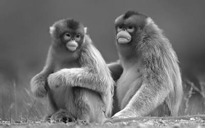 Mixed Media - Monkey See by Marvin Blaine