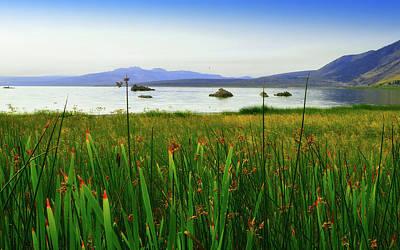 Moody Trees - Mono Lake California by Glenn McCarthy Art and Photography
