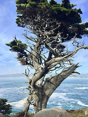Royalty-Free and Rights-Managed Images - Monterey Peninsula Point Lobos by Luisa Millicent