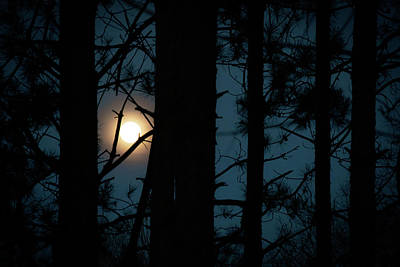 Photograph - Moon Amongst the Pines by Exploration Project