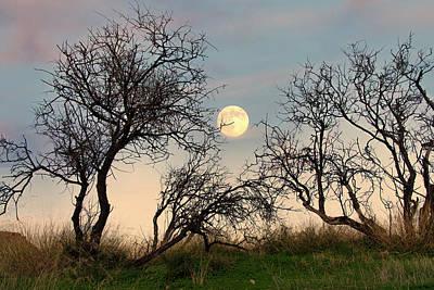 Photograph - Moon rise by Manolis Tsantakis