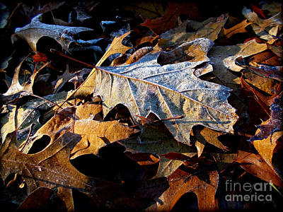 Frank J Casella Royalty-Free and Rights-Managed Images - Morning Frost Autumn Leaves by Frank J Casella