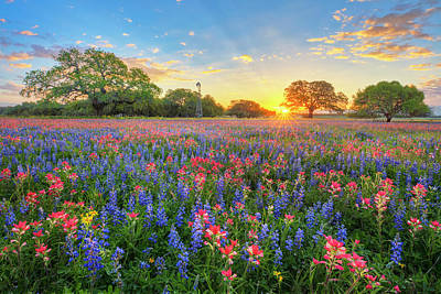 Firefighter Patents Royalty Free Images - Morning Glory of Spring Texas Wildflowers 3192 Royalty-Free Image by Rob Greebon