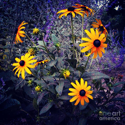 Namaste With Pixels Royalty Free Images - Morning Joy by Frank J Casella Royalty-Free Image by Frank J Casella