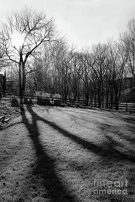 When Life Gives You Lemons - Morning Light Black and White by Karen Adams
