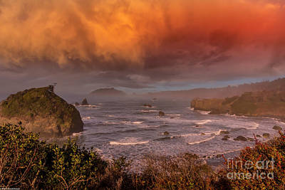 Palm Trees Rights Managed Images - Morning On The Lost Coast Royalty-Free Image by Mitch Shindelbower