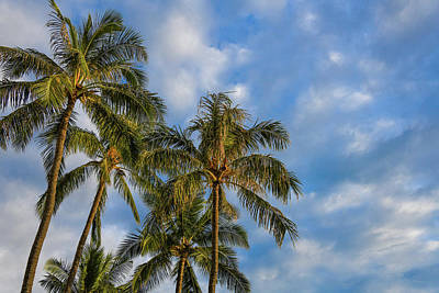 Abstract Stripe Patterns - Morning Palms by Kelly Wade