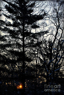 Frank J Casella Royalty-Free and Rights-Managed Images - Morning Sunrise Pine Tree Silhouette by Frank J Casella