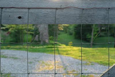 Photograph - Morning Web by Sharon Popek