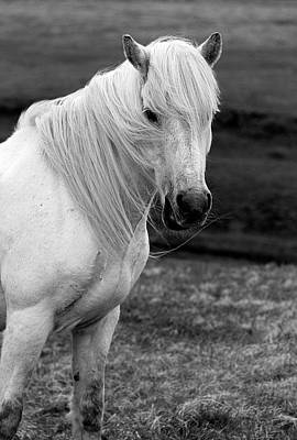 Lucille Ball Royalty Free Images - Morudalur Horse 3168 Royalty-Free Image by Bob Neiman