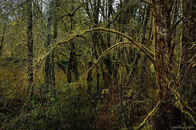 Moody Trees - Mossy Tree 33 by Mike Penney