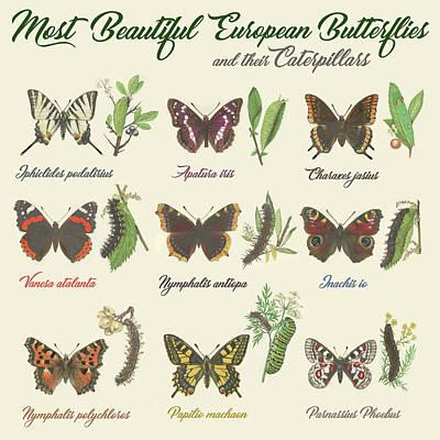 1920s Flapper Girl - Most Beautiful European Butterflies And Their Caterpillars by Gina Dsgn