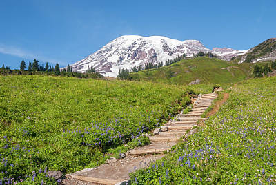 Moody Trees Rights Managed Images - Mount Rainier and Trail Royalty-Free Image by Marv Vandehey