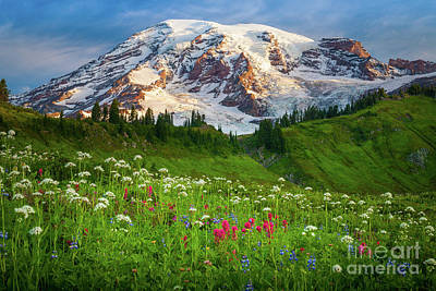 Clouds Rights Managed Images - Mount Rainier Flower Meadow Royalty-Free Image by Inge Johnsson